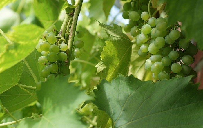 Vinos de Jerez | Embassy